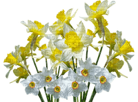 spring printemps frühling primavera весна wiosna    flower fleur blossom bloom blüte fleurs blumen    garden jardin  easter ostern Pâques paques  tube