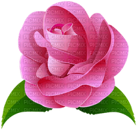 image encre color rose fleur edited by me