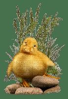 påsk-kyckling