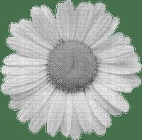 flower-blossom-blomma-fiore