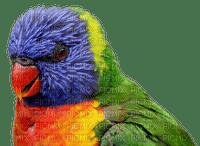 parrot, papukaija, lintu, bird