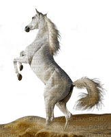 aze cheval blanc White