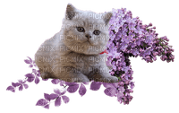loly33 chat lilas