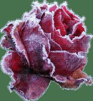 fleur de hiver givre rose winter