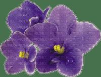 Fleur violette.Flower. violet.Deco.Victoriabea