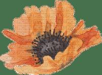 Fleur.Orange.Flower.watercolor.Victoriabea