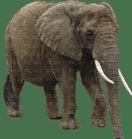 Kaz_Creations Elephant