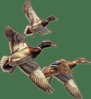 cecily-canards en vol