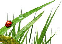ladybug grass coccinelle herbe