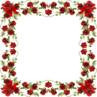 poppy flower frame coquelicot fleur cadre