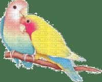 love birds  oiseaux amour