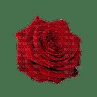 kukka, fleur, flower, rose