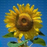 image encre la nature bon anniversaire fleur tournesol edited by me