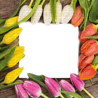 tulips flower frame spring tulipe fleur cadre printemps