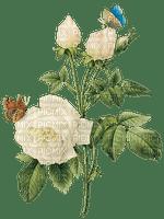 white rose blanc rose