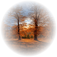 autumn forest automne foret paysage