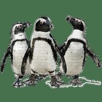 Penguins.Pingouins.Victoriabea