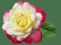 flower, fleur, kukka, ruusu, rose