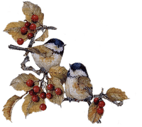 munot - herbst vögel - autumn birds - automne oiseaux