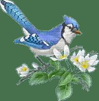 blue bird bleu oiseaux
