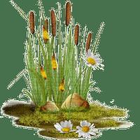 reed schilf roseau plant flower fleur fleurs pflanze spring printemps deco tube garden jardin garten plante pond teich etang