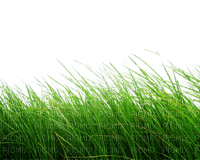 Kaz_Creations Grass Garden