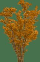 autumn tree, sunshine3