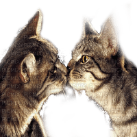 CAT KISS chat amour