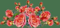 ruusu rose kukka flower fleur