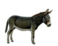Kaz_Creations Animals Donkey