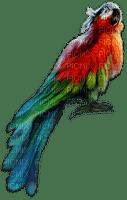 parrot anastasia