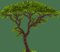 exotic tree africa