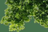 green leaves branch vert feuilles branche