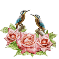 lintu, birds, ruusu, rose