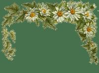 DAISY FLOWER BORDER marguerite fleur bordure