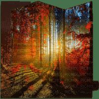 automne foret paysage autumn forest