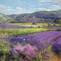 Lavender field Camarque - Paintinglounge