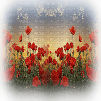 poppy flowers coquelicot paysage