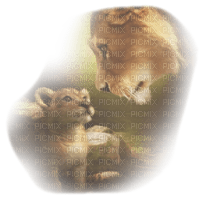 lion mom and lion baby felins