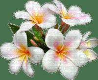 white flowers deco fleurs blanc