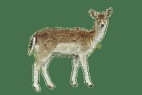 metsäkauris,capricorn, forest animal, metsäneläin