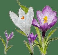 flowers flower spring _fleurs_ fleur _printemps _été _summer_tube
