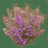 plante-purple-flower