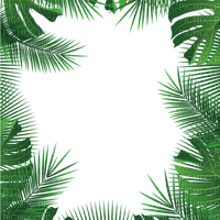 jungle palm tree frame jungle palmier cadre