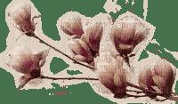 fleur marron.Cheyenne63