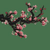 cherry blossom branch🍒🍒 cerise branche