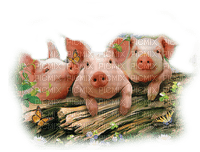 🐷porcelet cochon pig