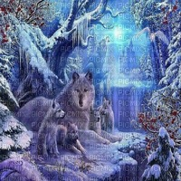 wolf winter bg