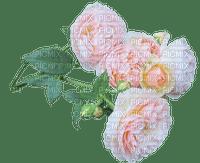 rose, ruusu, kukka, fleur, flower