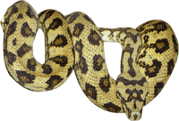 Kaz_Creations Animals Snake